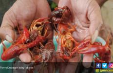 Petugas Bandara Gagalkan Penyelundupan 22 Kantong Lobster - JPNN.com