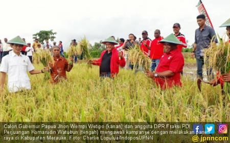 Panen Raya di Merauke, JWW Bakal Bangun Gudang demi Petani