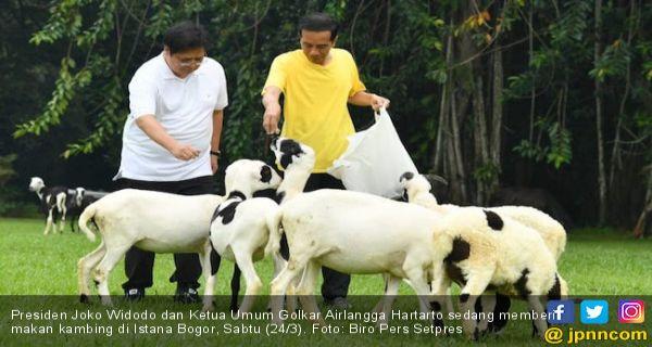 Tak Lagi Era Orde Baru, Sanjungan Jokowi untuk Airlangga Bukanlah Restu - JPNN.COM