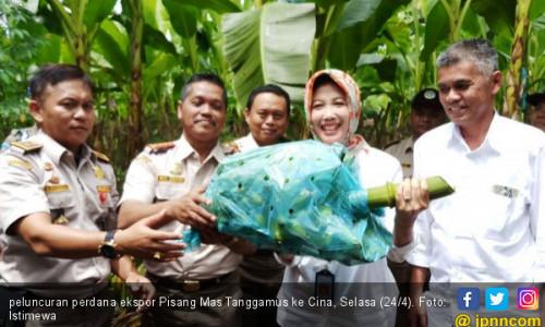 Ekspor Produk Pertanian Asal Lampung Terus Meningkat