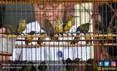 BKSDA Jambi Amankan Ratusan Ekor Burung Dilindungi Negara - JPNN.COM