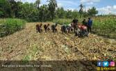 Lahan Kering Iklim Kering Harapan Pertanian Masa Depan - JPNN.COM