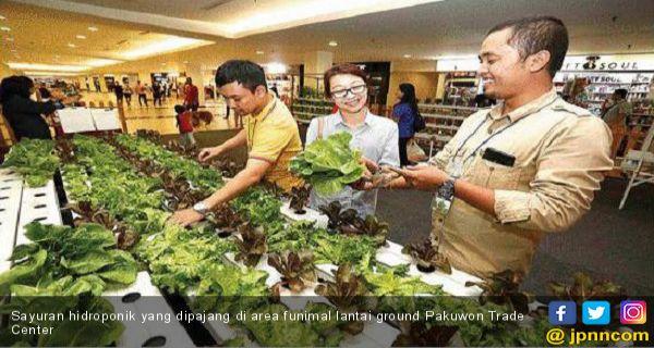 Raih Rp 20 Juta Dari Sayuran Hidroponik Daerah Jpnn Com Mobile