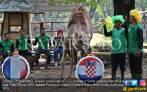 Kompak! Unta, Kuda Poni dan Embek Jagokan Kroasia - JPNN.COM