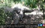 BKSDA Sebut Gajah Jantan di Aceh Timur Mati karena Diracun - JPNN.COM