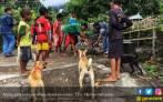Kementan Bakal Perbanyak Daerah Bebas Rabies - JPNN.COM