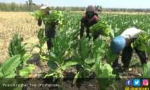 Semua Regulasi Soal IHT Berdampak Pada Pekerja di Sektor Tembakau