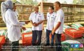 Beternak Ayam, Cara Kementan Entaskan Kemiskinan di Jember - JPNN.COM