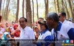Koreksi Hutan Era Jokowi Berhasil Buka Ribuan Lapangan Kerja - JPNN.COM