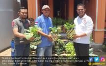 Kementan Dorong Swasembada Sayuran dari Pekarangan - JPNN.COM