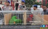 Polda Kepri Gagalkan Penyeludupan Hewan Langka dari Maluku - JPNN.COM