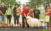 Aksi Nyata pada Anjing Telantar - JPNN.COM