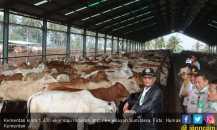 Kementan Salurkan 1.430 Ekor Sapi Indukan ke Daerah Sumatera