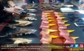 Penyeludup Paruh Burung Rangkong Ditangkap di Aceh Tenggara - JPNN.COM