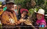 Jawa Tengah Sentra Produksi Lengkeng Terbesar - JPNN.COM