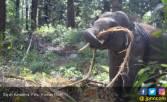 Inilah Konservasi Eksitu Gajah Ramah Lingkungan di Aek Nauli - JPNN.COM