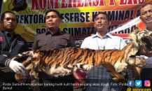 Polda Sumut Ungkap PerdaganganKulit Harimau Sumatera