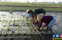 Banjir Jadi Penyebab Klaim Terbesar Asuransi Pertanian di Sumsel - JPNN.com