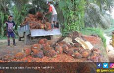 Diadang Uni Eropa, Indonesia Bidik India Jadi Pasar Baru Ekspor CPO - JPNN.com