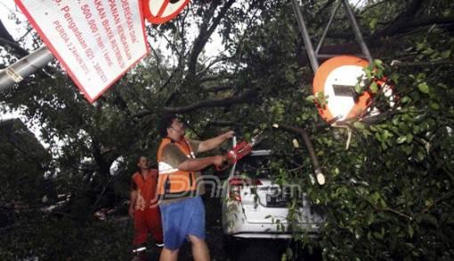 Hujan Lebat, 2 Mobil Tertimpa Pohon Tumbang - JPNN.COM
