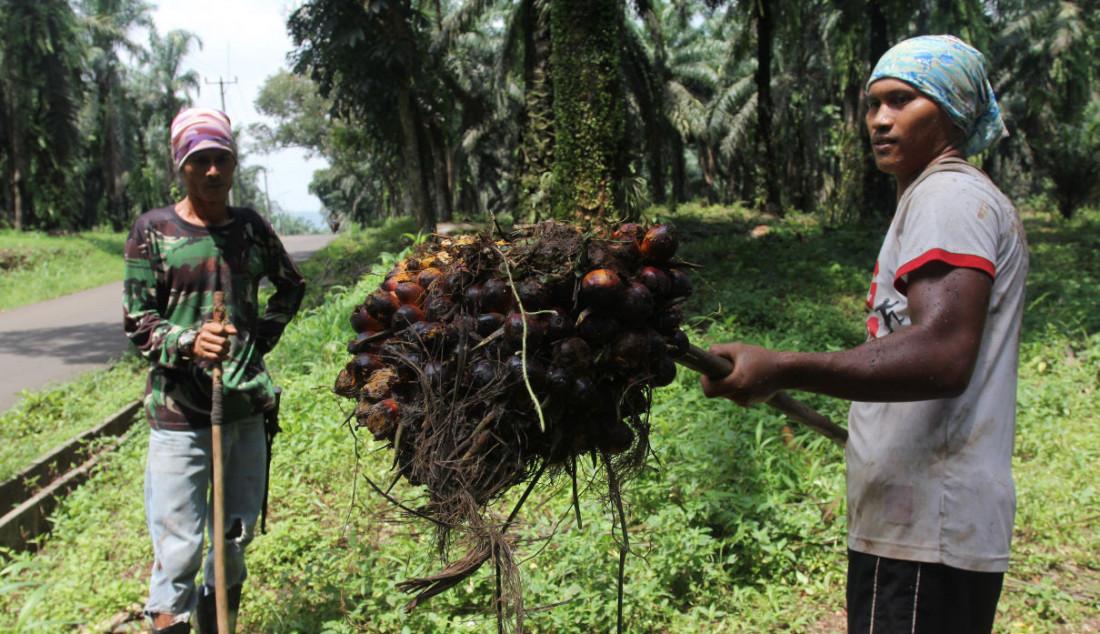 Pekerja mengangkat kelapa sawit di Perkebunan sawit di kawasan Candali Bogor, Jawa Barat, Jumat (17/9). Gabungan Pengusaha Kelapa Sawit Indonesia (GAPKI) melaporkan produksi (Crude Palm Oil) CPO di bulan Juli sebesar 4,1 juta ton, naik 5,4% dari tahun lalu, tetapi mengalami penurunan 9,5% dari bulan Juni. Foto: Ricardo - JPNN.com