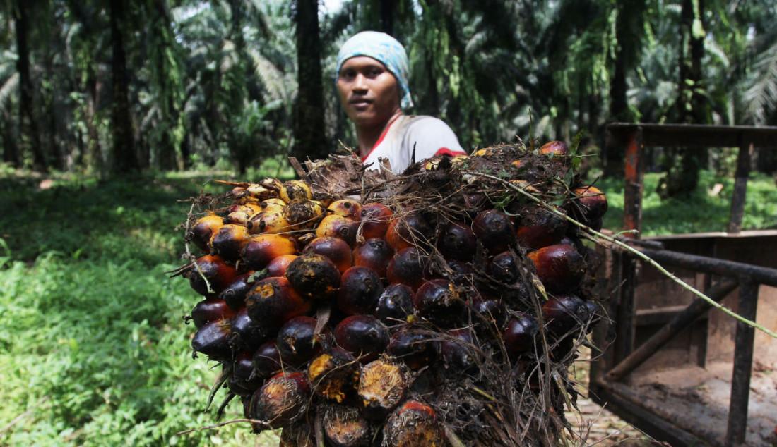 Pekerja mengangkut kelapa sawit di Perkebunan sawit di kawasan Candali Bogor, Jawa Barat, Jumat (17/9). Gabungan Pengusaha Kelapa Sawit Indonesia (GAPKI) melaporkan produksi (Crude Palm Oil) CPO di bulan Juli sebesar 4,1 juta ton, naik 5,4% dari tahun lalu, tetapi mengalami penurunan 9,5% dari bulan Juni. Foto: Ricardo - JPNN.com