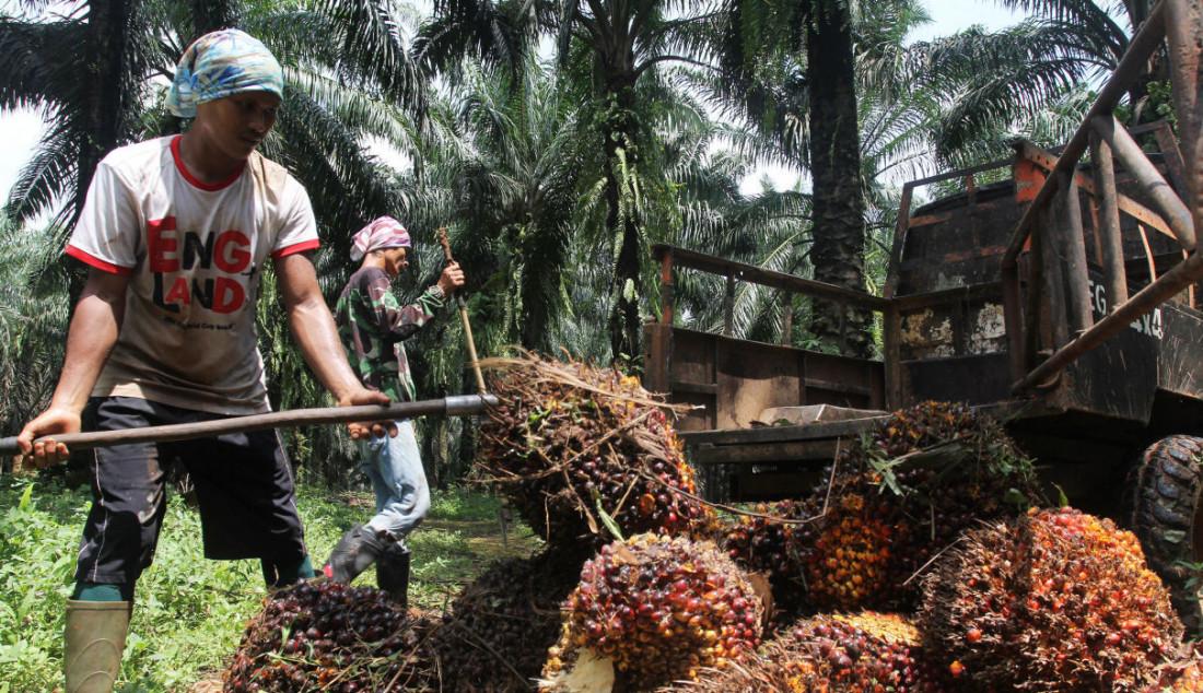 Pekerja mengangkut kelapa sawit di perkebunan Candali Bogor, Jawa Barat. Gabungan Pengusaha Kelapa Sawit Indonesia (GAPKI) melaporkan produksi (Crude Palm Oil) CPO di bulan Juli sebesar 4,1 juta ton, naik 5,4% dari tahun lalu, tetapi mengalami penurunan 9,5% dari bulan Juni. Foto: Ricardo - JPNN.com