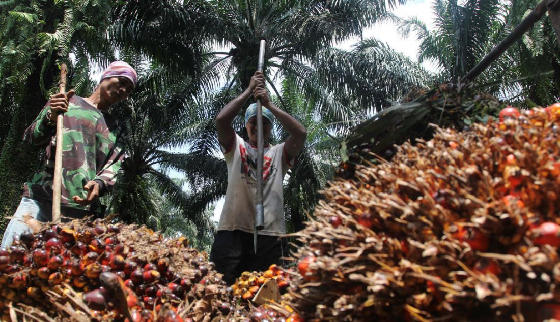 Pekerja mengangkut kelapa sawit di perkebunan Candali Bogor, Jawa Barat. Foto: Ricardo - JPNN.com