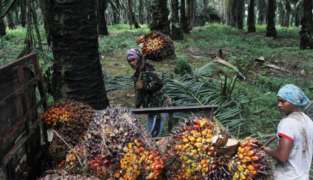 Pekerja saat menyelesaikan pekerjaan di Perkebunan sawit di kawasan Candali Bogor, Jawa Barat, Jumat (17/9). Gabungan Pengusaha Kelapa Sawit Indonesia (GAPKI) melaporkan produksi (Crude Palm Oil) CPO di bulan Juli sebesar 4,1 juta ton, naik 5,4% dari tahun lalu, tetapi mengalami penurunan 9,5% dari bulan Juni. Foto: Ricardo - JPNN.com