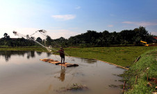 Tanaman Gulma Tutupi Situ Tujuh Muara - JPNN.com