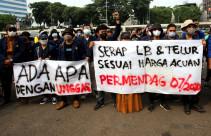 Aksi Selamatkan Peternak Ayam Mandiri - JPNN.com