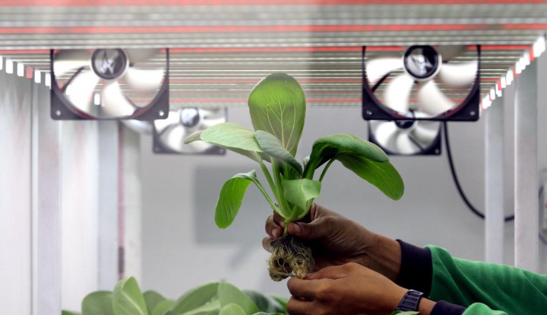 Petugas kebun menyiram tanaman di Container Farming dan Agro Electrifying, di Agro Edukasi Wisata Ragunan, Jakarta, Rabu (13/10). Foto: Ricardo - JPNN.com