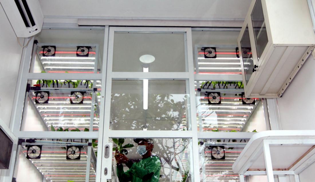 Petugas kebun menyiram tanaman di Container Farming dan Agro Electrifying, di Agro Edukasi Wisata Ragunan, Jakarta, Rabu (13/10). Container Farming tersebut merupakan hasil dari kolaborasi antara Dinas Ketahanan Pangan, Kelautan dan Pertanian (KPKP) DKI Jakarta dengan PLN Peduli untuk pengembangan budi daya pertanian tanpa tanah yang tidak tergantung pada sinar matahari, tapi dengan teknologi sinar UV untuk memenuhi kebutuhan pangan dalam skala rumah tangga. Foto: Ricardo - JPNN.com