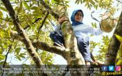 Refreshing, Bupati Lebak Pilih Panjat Pohon - JPNN.COM