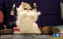 Aksi Kucing-Kucing Menggemaskan - JPNN.COM