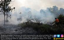 Kebakaran Lahan Gambut Terus Berlanjut - JPNN.COM