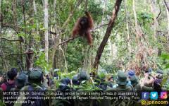 Taman Nasional Tanjung Puting - JPNN.COM
