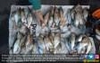Ikan Mabuk, Warga Ramai-ramai Serbu Sungai - JPNN.COM