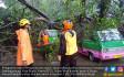 Hujan Lebat di Bogor Tumbangkan Pepohonan - JPNN.COM