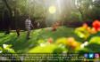 Cantiknya Taman Tabebuya Jagakarsa - JPNN.COM