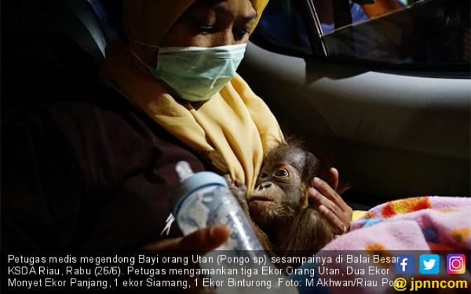 BBKSDA Riau Gagalkan Penyelundupan Satwa - JPNN.COM