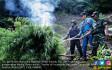 Dua Hektar Lahan Ganja Dimusnahkan - JPNN.COM