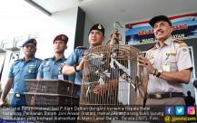 Petugas Gagalkan Aksi Penyelundupan Burung - JPNN.COM