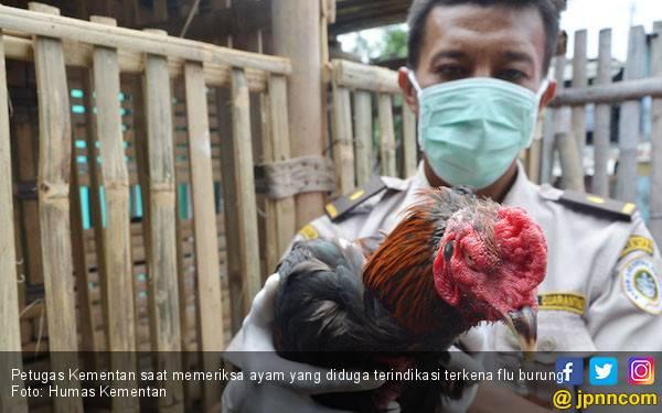 Kementan Larang Pemasukan Unggas dan produknya dari Malaysia - JPNN.COM