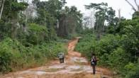 East Kalimantan Jungle in Dire Situation - JPNN.COM