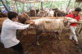 Cegah Anthrax di Sulsel dan Gorontalo, Kementan Turunkan Tim - JPNN.COM
