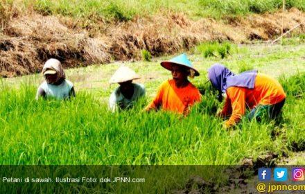 Survei LIPI: Hanya 3% Anak Petani Lanjutkan Kiprah Ortunya - JPNN.COM