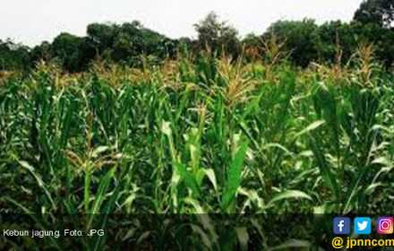 Mentan Memotivasi Petani di Bengkulu Selatan - JPNN.COM