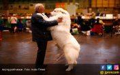 Mengapa Anjing Jadi Sahabat Terbaik Manusia? Nih Penjelasannya - JPNN.COM