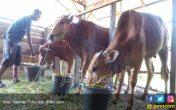 Pertumbuhan Industri Pengolahan Susu Membuka Peluang bagi Peternak Dalam Negeri - JPNN.COM